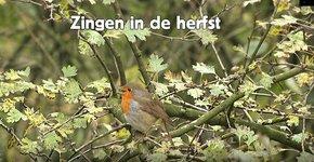 Videostill Zingen in de herfst