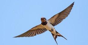 boerenzwaluw/ Shutterstock