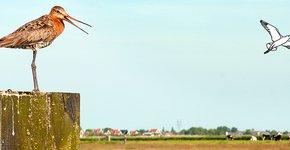 Grutto / Nature in Stock - Marcel van Kammen