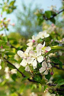 Appelboom / Shutterstock