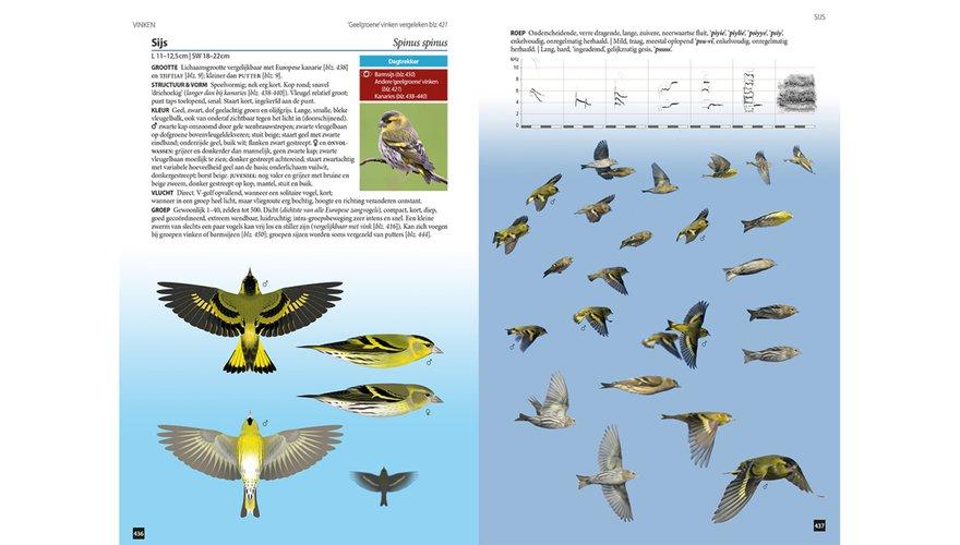 Spread sijs Vogels in vlucht