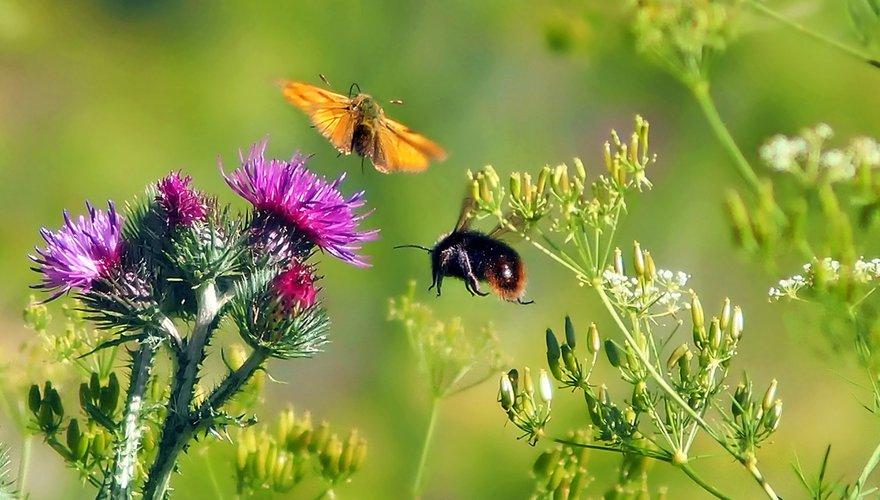 Insect en vlinder / Pixabay
