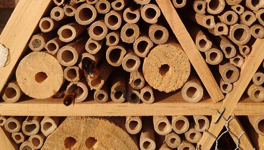 Bijenhotel / Jeanet van Zoelen