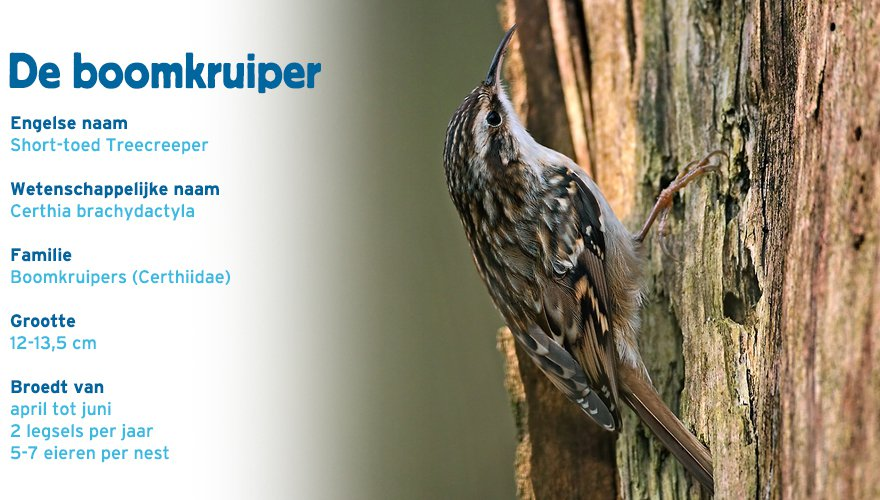 boomkruiper paspoort tuinvogelcursus