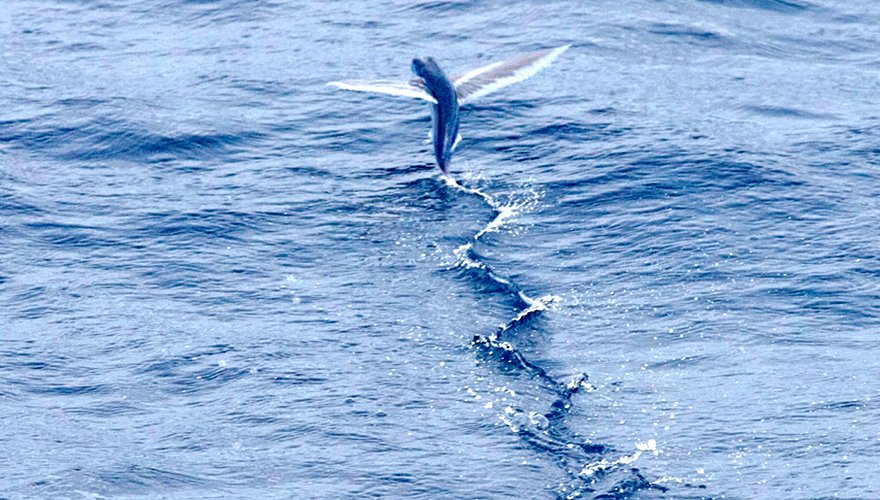 Vliegende vis / Rob Buiter