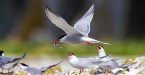 Visdief / Shutterstock
