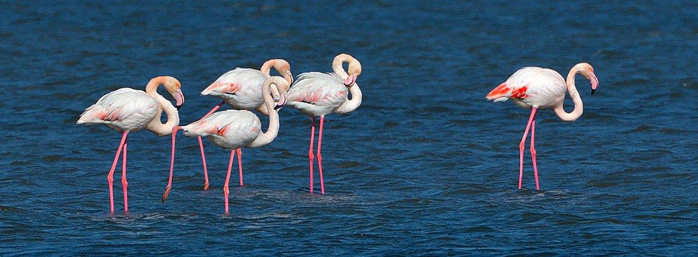 Flamingo / Shutterstock