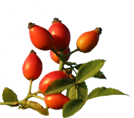 Rozenbottel / Pixabay