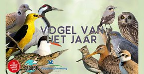Banner Vogels van het jaar DWDD