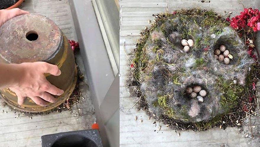 Nest in bloempot / Gea van der Tuuk