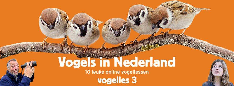 Vogels in Nederland - Vogelles 3