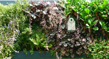 Groene muur met nestkast / Jose van Doorn