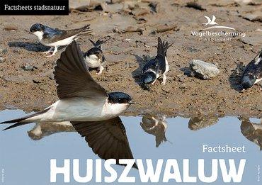 Download factsheet huiszwaluw