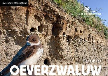 Download factsheet oeverzwaluw