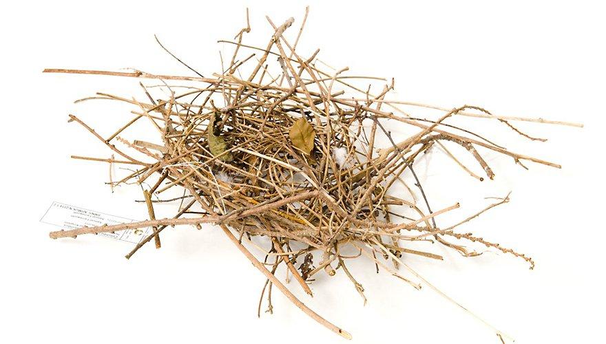Houtduif nest / Lars Soerink