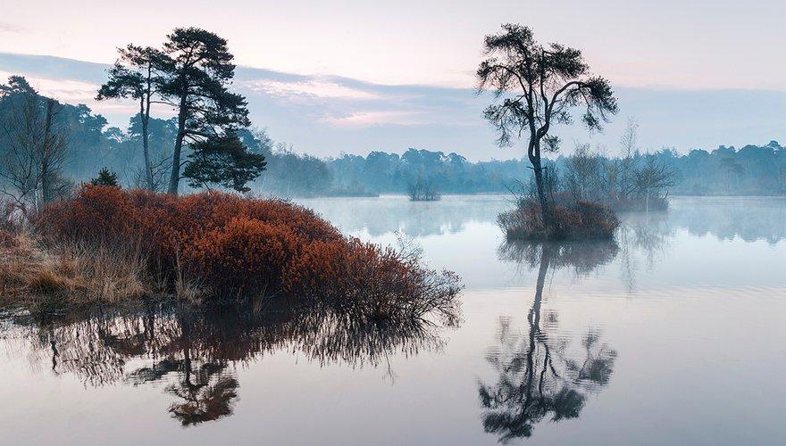 Oisterwijkse bossen / Shutterstock