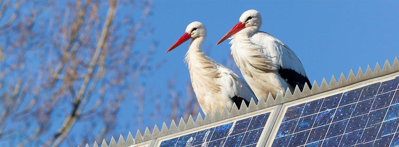 Ooievaars op zonnepanelen / Shutterstock