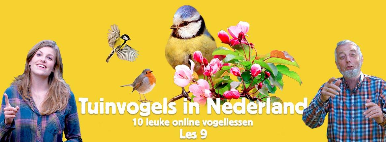 Header les 9 tuinvogelcursus