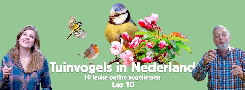 Header les 10 tuinvogelcursus