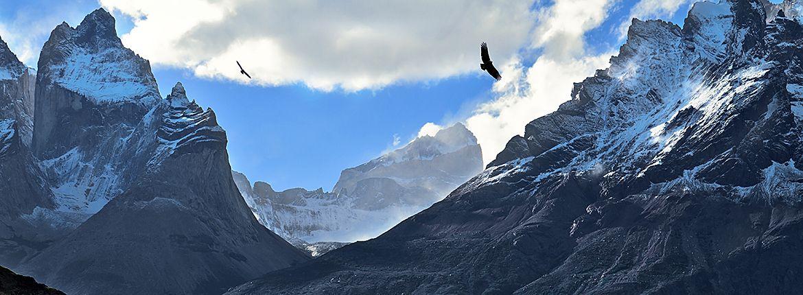 Condor / Shutterstock