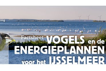 Factsheet Vogels en de energieplannen voor het IJsselmeer