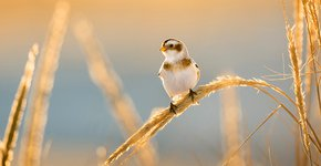 Sneeuwgors / Shutterstock