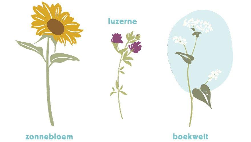 PARTRIDGE bloemen