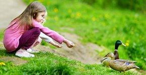 Wilde eend voer / Shutterstock