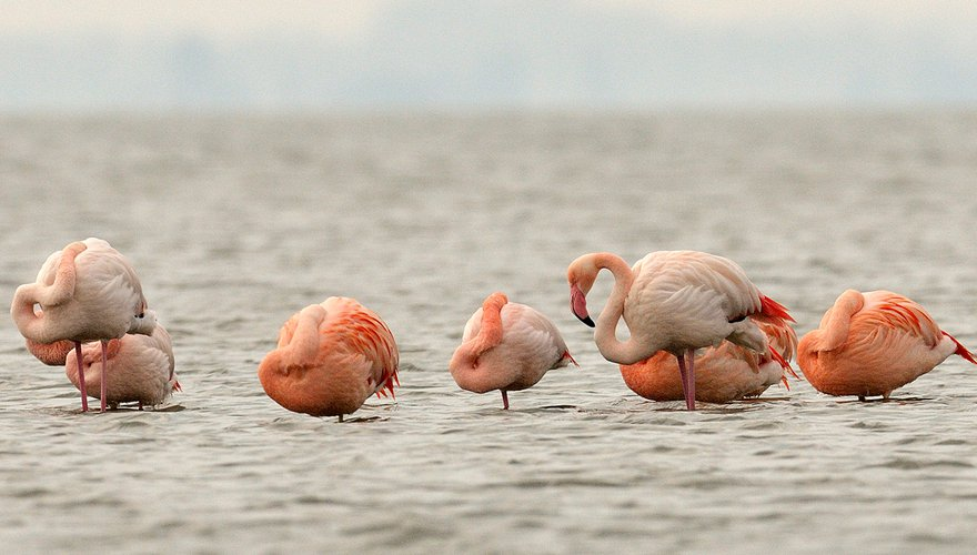 Flamingo / Jelle de Jong