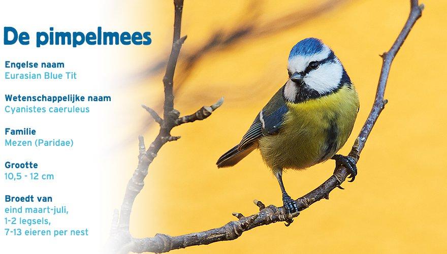 Pimpelmees paspoort tuinvogelcursus