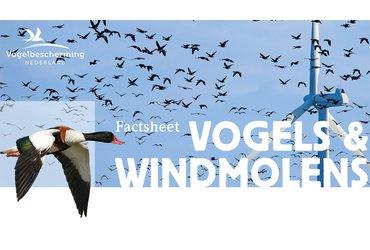 Factsheet Vogels en windmolens