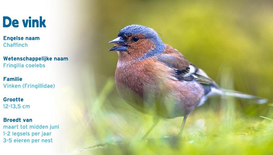 vink paspoort tuinvogelcursus