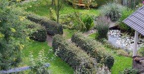 Tuin / Liesbeth van Weert