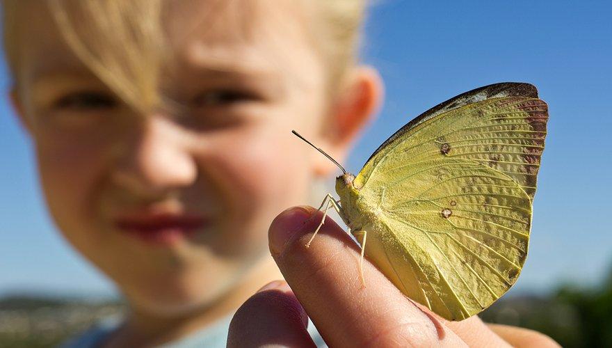 Kind met vlinder / Shutterstock