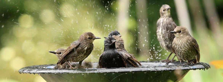 Spreeuw / Shutterstock