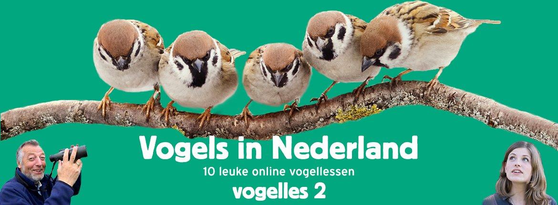 Vogels in Nederland - Vogelles 2