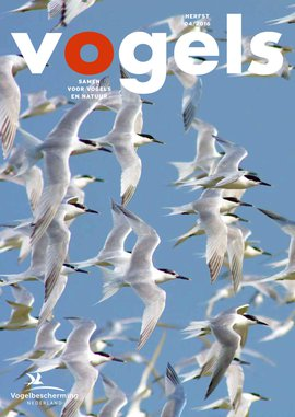 Cover Vogels 04 / 2016