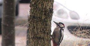Videostill Stadsvogelfilm seizoensmailing