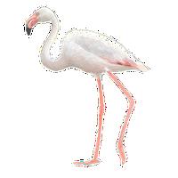 Flamingo / Elwin van der Kolk