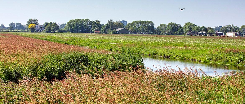 Kruidenrijk weiland / Fred van Diem