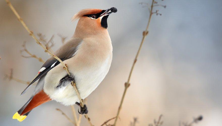 Pestvogel / Shutterstock