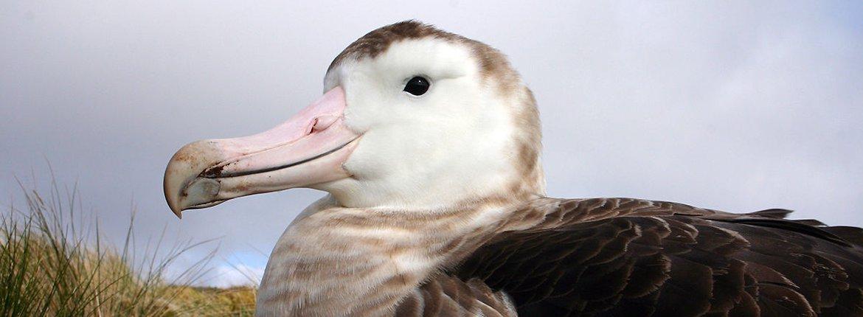 Amsterdam albatros / Mathieu Authier