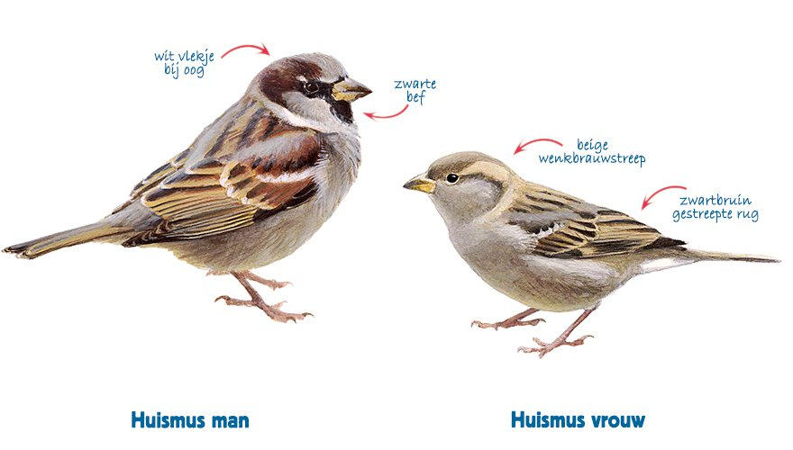 Infographic huismus vrouw - huismus man