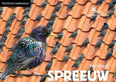 Download factsheet spreeuw