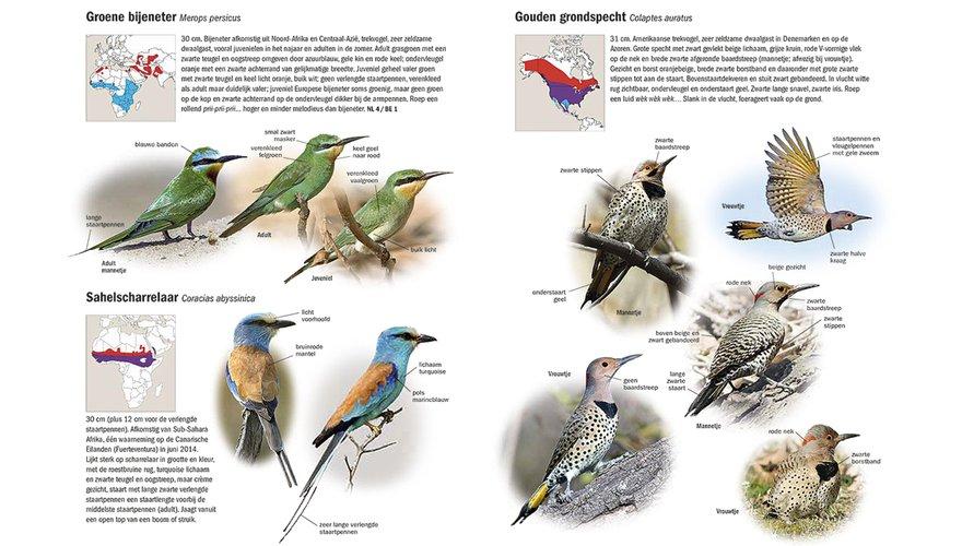 Spread boek Zeldzame Vogels van Europa