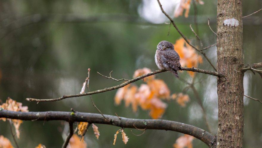 Dwerguil / Shutterstock