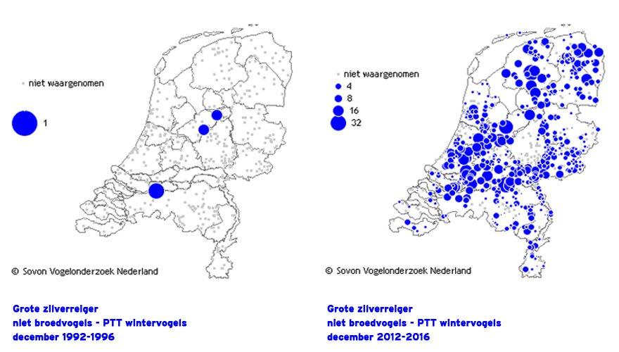 Winterverspreiding grote zilverreiger / Sovon.nl