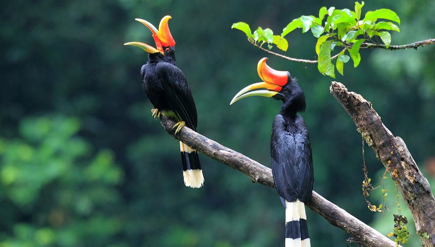 Neushoornvogel / Shutterstock