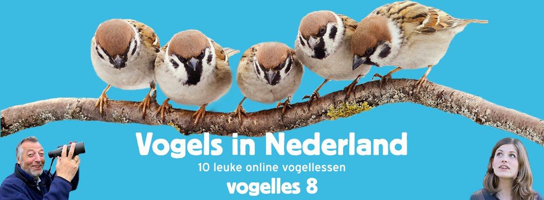 Vogels in Nederland - Vogelles 8