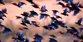 Spreeuwen / Shutterstock